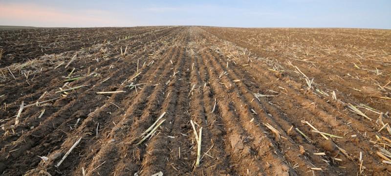 Análisis del Actual Despilfarro de Alimentos y sus Consecuencias Ambientales